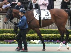 20170205 東京1R 3歳未勝利 メガポリゴン 05