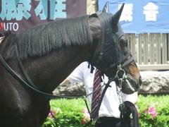 20190504 東京4R 3歳未勝利 ショウナンサジン 12