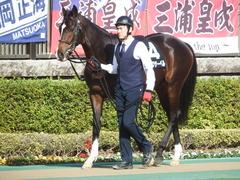 20190216 東京9R フリージア賞 3歳500万下 ホウオウサーベル 03