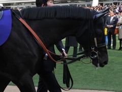 20141228 中山10R 有馬記念 サトノノブレス 02