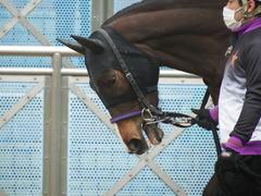20190323 中山9R ミモザ賞 3歳牝馬(500) トロハ 07