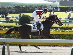 20161015 東京6R (500) ピッツバーグ 16