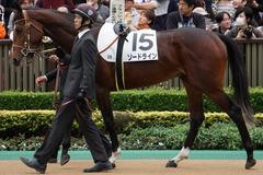 20191124 東京5R 2歳メイクデビュー ソードライン 09