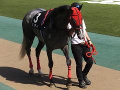 20170430 東京11R スイートピーS 3歳牝馬OP ミザイ 10