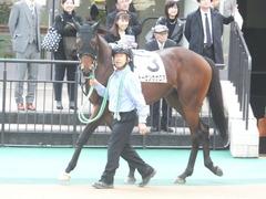 20141130 東京3R 2歳未勝利 トーセンカナロア 01