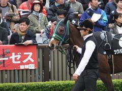 20161127 東京8R シャングリラ賞 ツクバアスナロ 06