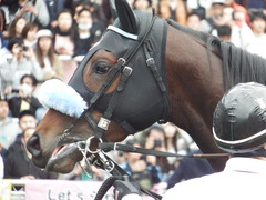 20180415 中山11R 皐月賞(G1) ダブルシャープ 13