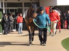 20150125 中山5R 3歳未勝利 トーセンカナロア 03