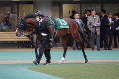 20200222 東京11R ダイヤモンドS(G3) ヴァントシルム 09