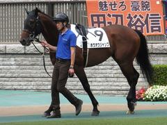 20170618 東京4R 3歳未勝利 ホウオウジャンプ 04