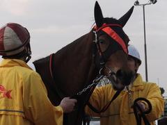 20151224 大井2R 2歳新馬 マルカンヒラリー 12