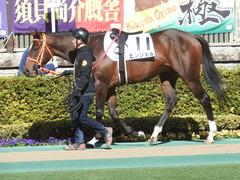 20190126 東京5R 3歳未勝利 ピンシェル 06