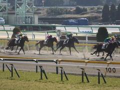 20150221 東京1R 3歳未勝利 フレンドマキシマム 09