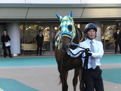 20151128 東京11R キャピタルS アルマディヴァン 04