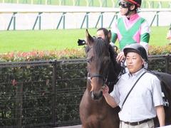 20161023 東京9R くるみ賞 2歳500万下 コウソクストレート 19