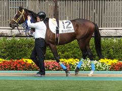 20141026 東京4R ラッシュアタック 08