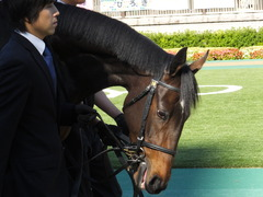 20131116 東京 サンドラバローズ07