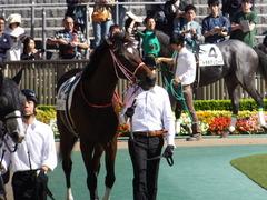 20161015 東京6R (500) ピッツバーグ 06