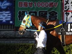 20151128 東京11R キャピタルS アルマディヴァン 08