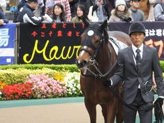 20161030 東京4R 2歳メイクデビュー ビルズトレジャー 10