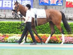 20170625 東京1R 3歳牝馬未勝利 プンメリン 04