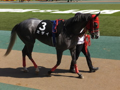 20170430 東京11R スイートピーS 3歳牝馬OP ミザイ 06