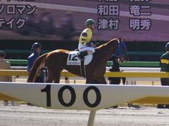 20170219 東京1R 3歳未勝利 ハッピーサンディー 17