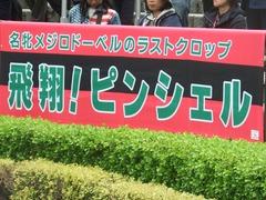 20190427 東京11R 青葉賞(G2) ピンシェル 01