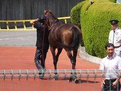 20170910 阪神3R 3歳未勝利 フェアチャイルド 36