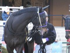 20170114 京都8R 4歳上牝馬500万下 サラマンカ 04