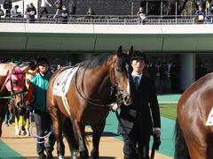 20150131 東京3R 3歳メイクデビュー プエルト 02