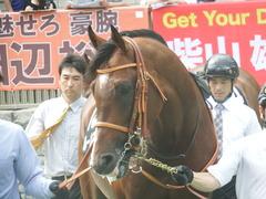 20190608 東京11R 多摩川S 3勝 ルーカス 13