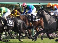 20170226 中山9R 富里特別4上(500) トーセンカナロア 23