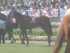 20120428 東京11R 青葉賞(G2)タムロトップステイ02