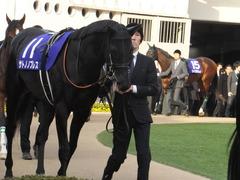 20141228 中山10R 有馬記念 サトノノブレス 04