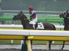 20170513 東京5R 3歳未勝利 トッテモイイコ 12
