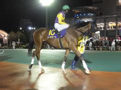 20141127 大井11R 勝島王冠(S3) ユーロビート 08