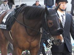 20140118 中山競馬場 ツクバアスナロ 09