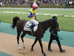20150222 東京4R 3歳未勝利 ロジダーリング 07