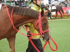20180929 中山5R 2歳牝馬メイクデビュー オトナノジジョウ 15
