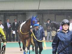 20170513 東京5R 3歳未勝利 トッテモイイコ 03