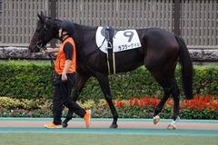 20191026 東京12R 3歳上1勝クラス ラプターゲイル 04