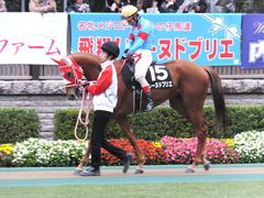 20151123 東京10R 鷹巣山特別 レーヌドブリエ 20