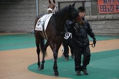 20191123 東京3R 2歳未勝利 ミスミルドレッド 03