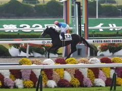 20151121 京都1R 2歳未勝利 アドマイヤムテキ 13