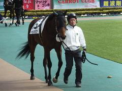 20150221 東京5R 3歳未勝利 トーセンカナロア 03