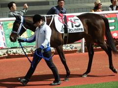 20180331 阪神3R 3歳未勝利 テンノカガヤキ 06