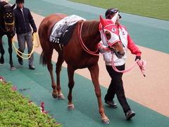 20171118 東京10R ユートピアS(牝1600) レーヌドブリエ 07