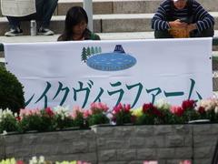 20171014 京都3R 2歳未勝利 ハルキスター 01