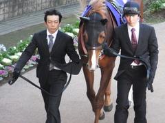 20131222 有馬記念 オルフェーブル 02